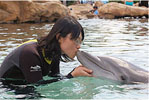 Discovery Cove – Kissing a Dolphin